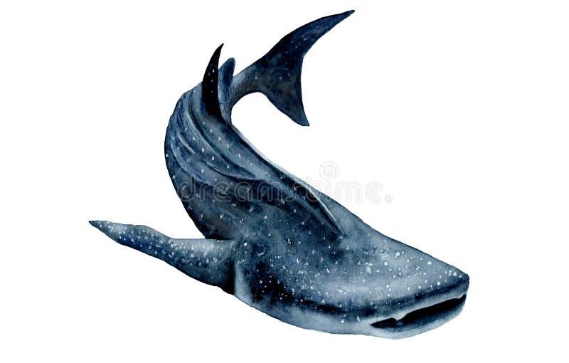Akwarela obrazek 3d ścinek nad ścieżką odpłaca się cienia rekinu wielorybi biel Rhincodon typus ilustracja wektor