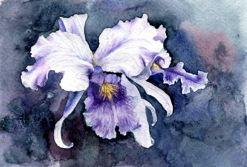 Akwarela obrazek purpurowy irys royalty ilustracja