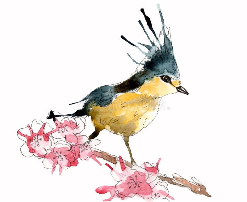 Akwarela obrazek wiosna ptak na gałąź, krople royalty ilustracja