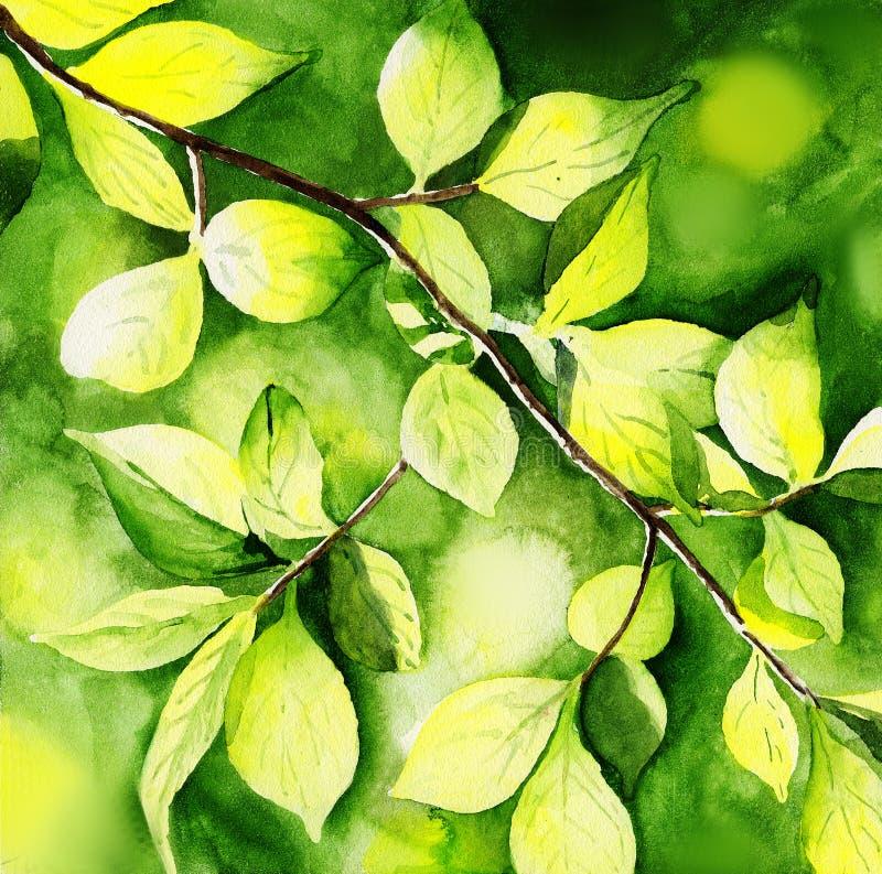 Akwarela obrazu ilustracyjny światło słoneczne na drzewnym liściu obrazy royalty free