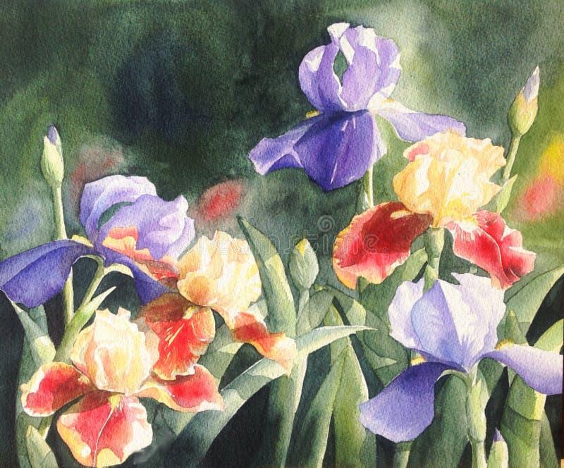 Akwarela obrazu ilustracyjny purpurowy irysowy kwiat obraz stock