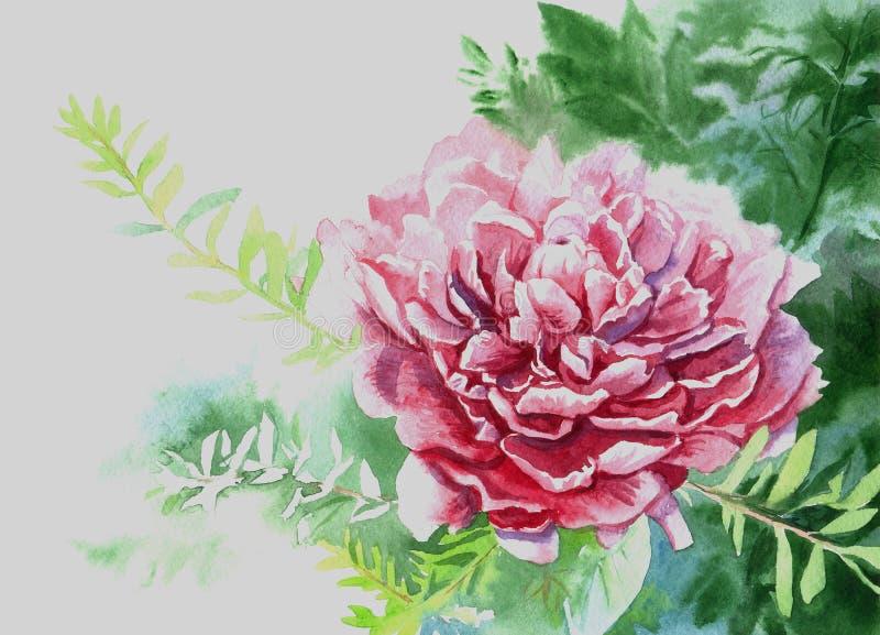 Akwarela obrazu kwiatu peonia ilustracji