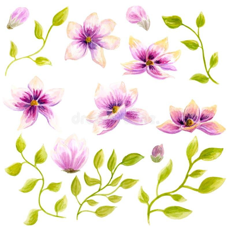 Akwarela obrazu okwitnięcia Magnoliowego kwiatu dekoraci tapetowa sztuka Ręka rysująca odosobnionego zbliżenia drzewna kwiecista  zdjęcia stock