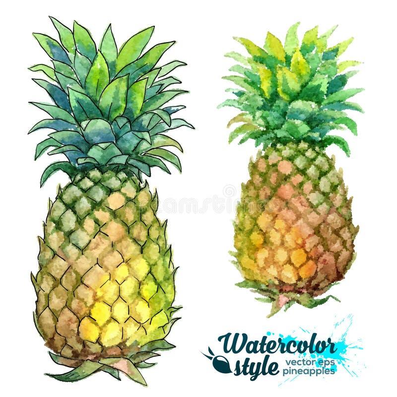 Akwarela obrazu wektorowi świezi ananasy royalty ilustracja