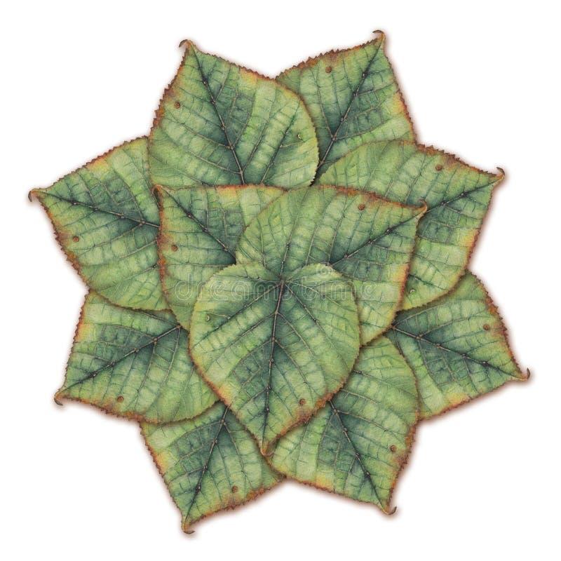 Akwarela obrazu wzór zieleni lipowi liście fotografia royalty free