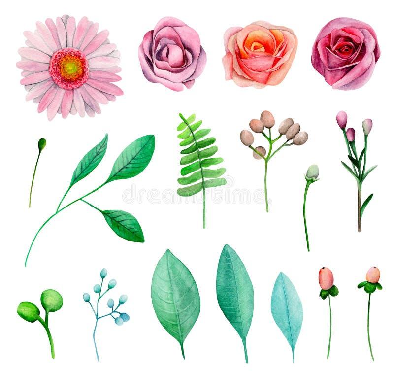 Akwarela ogród kwitnie wektor ilustracji