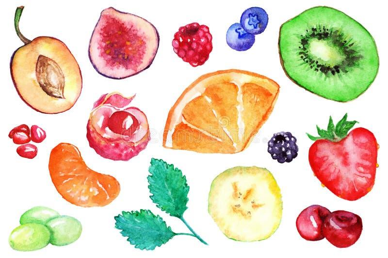 Akwarela plasterka egzotyczny owocowy jagodowy set royalty ilustracja