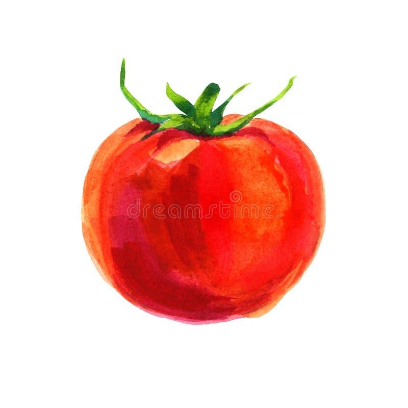 Akwarela pomidor na białym tle ilustracja wektor