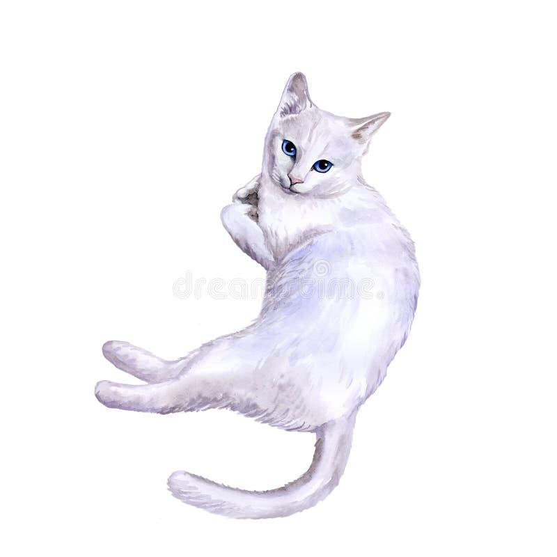 Akwarela portret rzadki egzotyczny Khao Manee, Diamentowy oko kot na białym tle ilustracja wektor