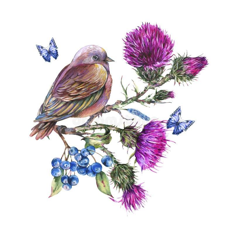 Akwarela ptak na gałąź z osetem, błękitni motyle, jagody, dzikich kwiatów ilustracja, łąkowi ziele ilustracja wektor