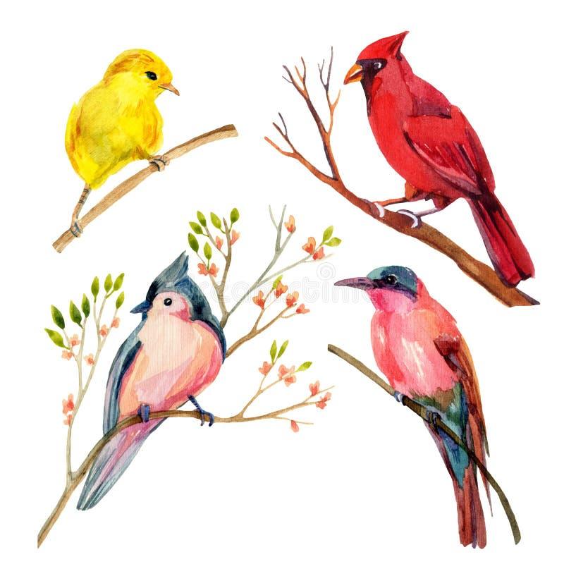 Akwarela ptak ustawiający: czerwony kardynał, kiciasty titmouse, żółty warbler i zjadacz, ilustracji