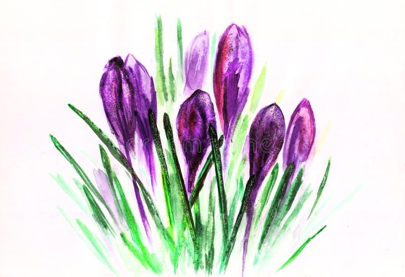 Akwarela purpurowi tulipany z zielenią opuszczają rysunek ilustracja wektor