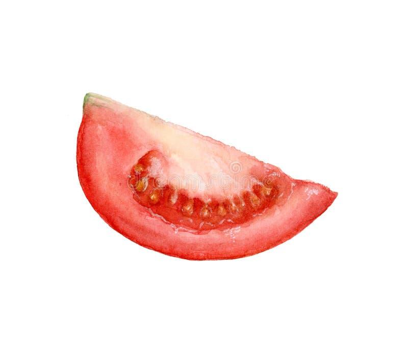 Akwarela ręka rysujący pomidory odizolowywający na bielu royalty ilustracja