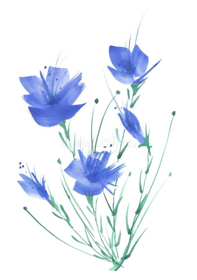 Akwarela rocznika obrazek, botaniczny wzór, błękitny maczek, knapweed, wzrastał, leluja, dzicy kwiaty, trawa, rośliny, liście royalty ilustracja