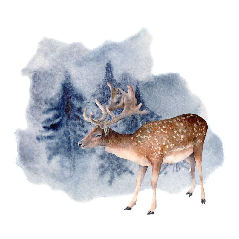 Akwarela rogacze w zimy lasowej ręce malowali zwierzęcą ilustrację z ugorów rogaczami odizolowywającymi na whit sosnami i ilustracji