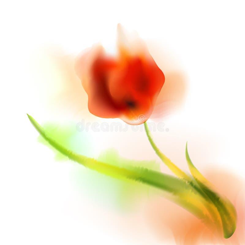 Akwarela romantyczny kwitnący maczek kwitnie odosobnionego wektorowego ilustracyjnego szablon dla poślubiać, walentynki, matka dz fotografia royalty free