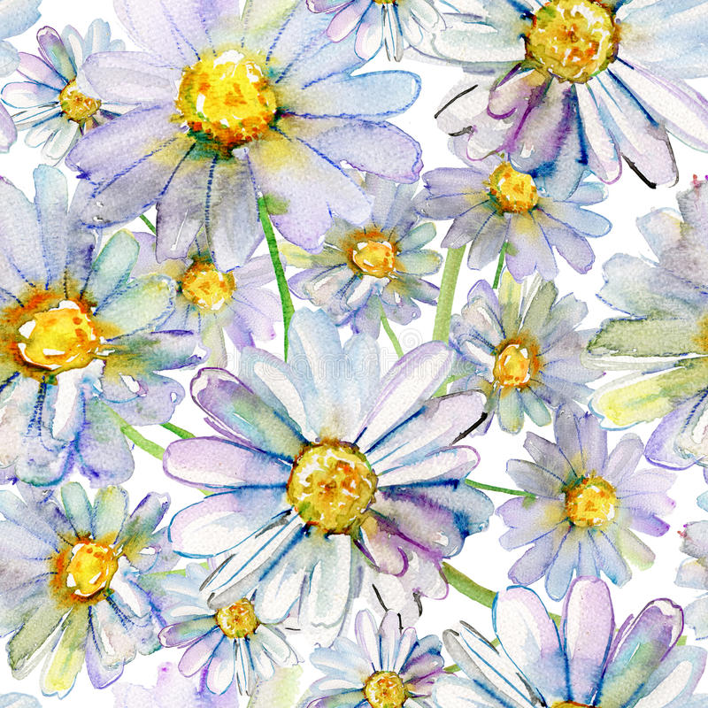 Akwarela rumianku kwiaty royalty ilustracja