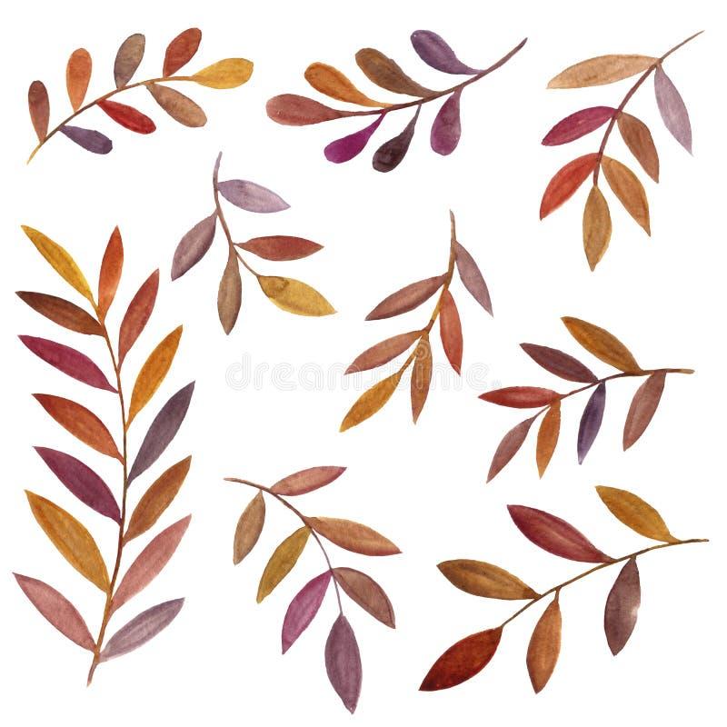 Akwarela rysuje brązów liście ilustracji