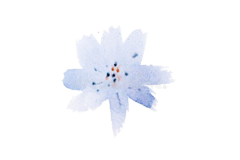 Akwarela rysunek świezi ogrodowi kwiaty, lato bukieta aquarelle łąkowy obraz ilustracja wektor