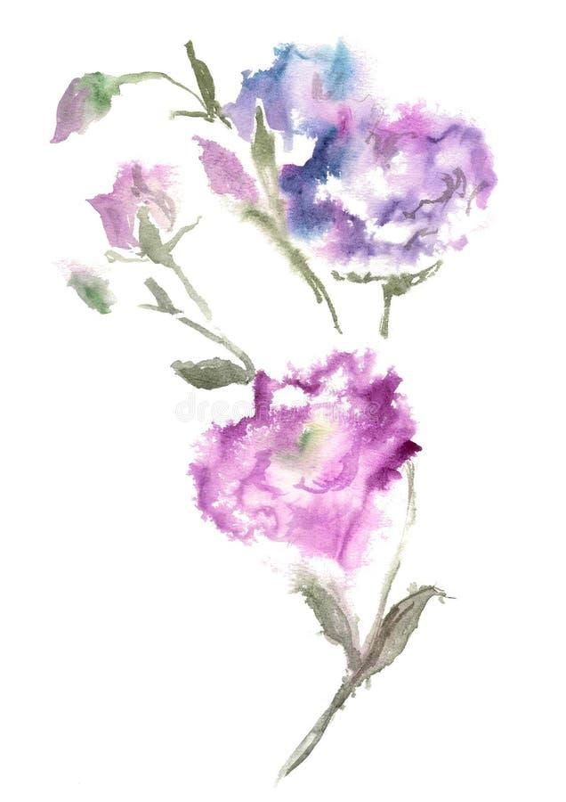 Akwarela rysunek błękitny Lizantus lub Eustoma ilustracja wektor