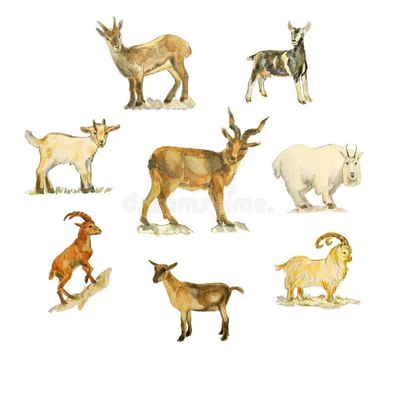 Akwarela rysunek różne kózki royalty ilustracja