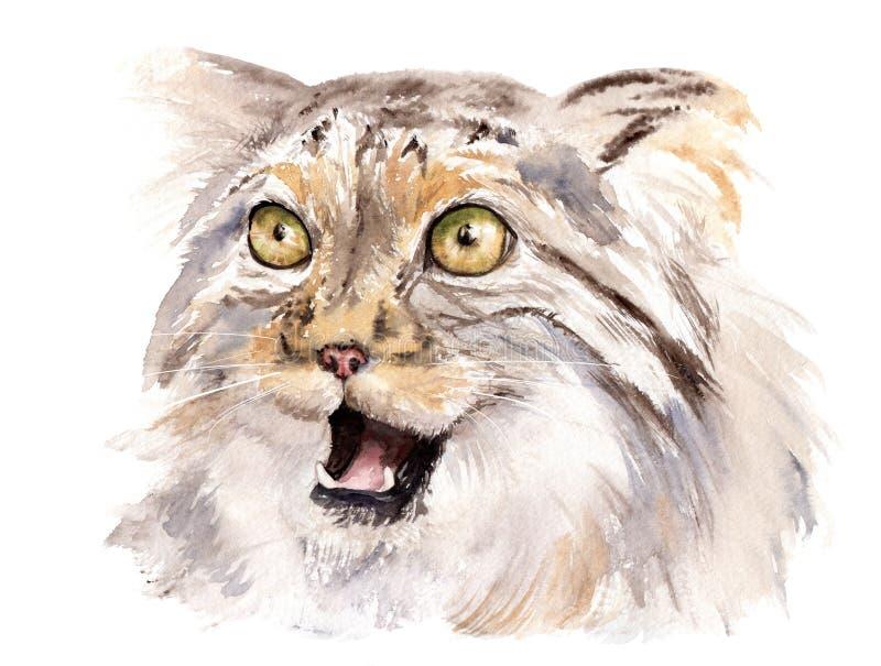 Akwarela rysunek zwierzę - kota manul z otwartym usta ilustracja wektor
