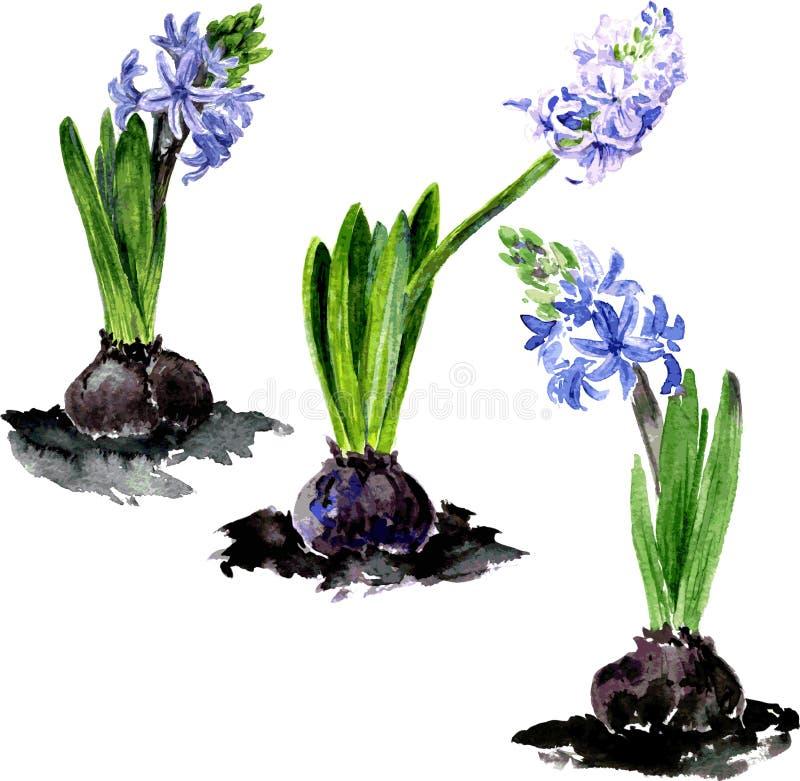 Akwarela rysunku kwiaty royalty ilustracja