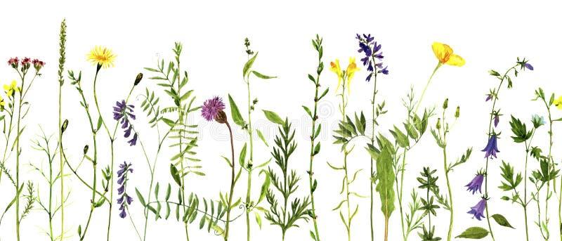 Akwarela rysunku rośliny royalty ilustracja
