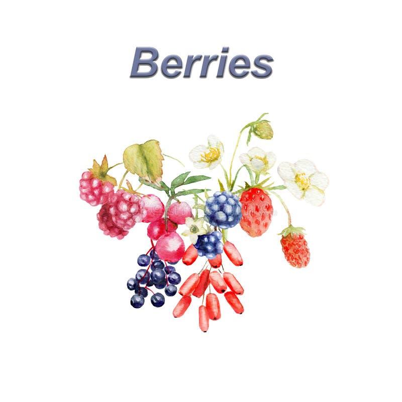 Akwarela skład dzikie jagody: truskawka, czernica, greenberry, rosehip, malinka, berberys pospolity royalty ilustracja