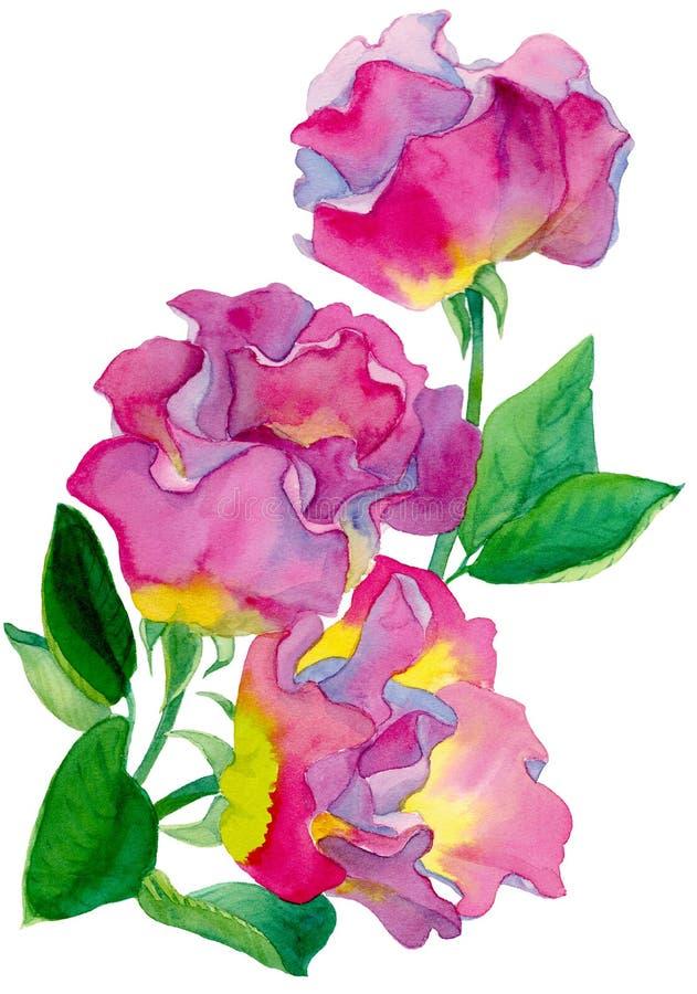 Akwarela skład trzy róży menchii i żółtego kolor z zielonymi liśćmi royalty ilustracja