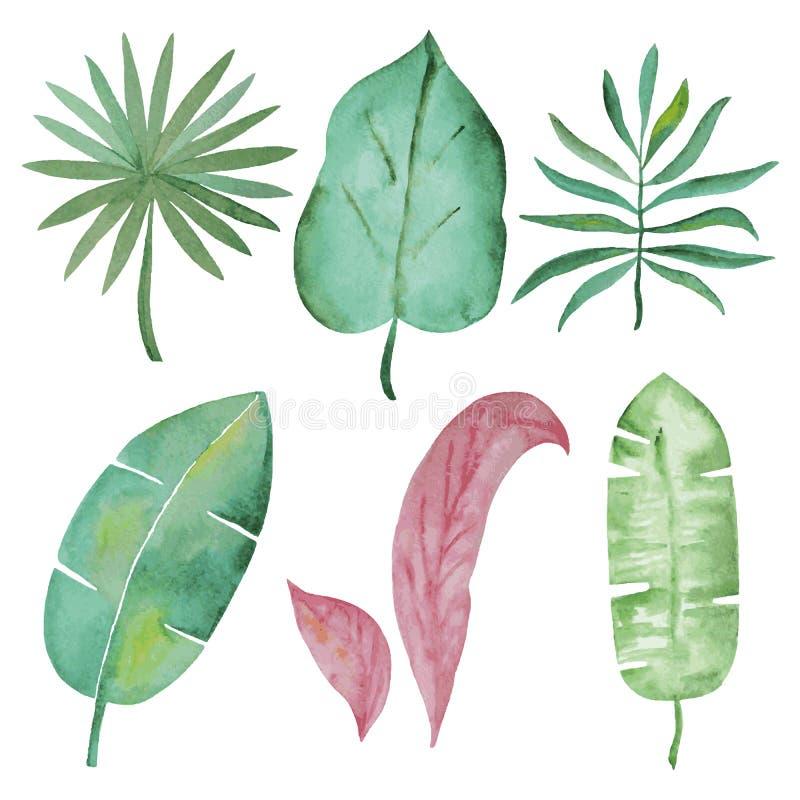 Akwarela tropikalni liście royalty ilustracja
