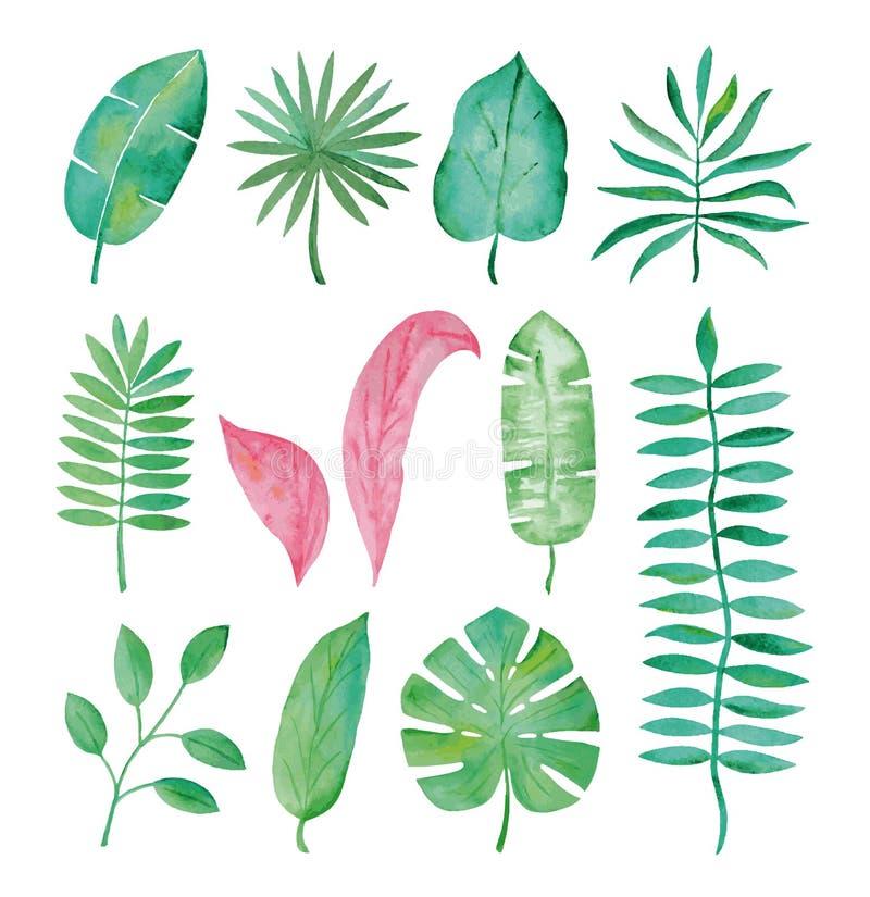 Akwarela tropikalni liście na białym tle royalty ilustracja