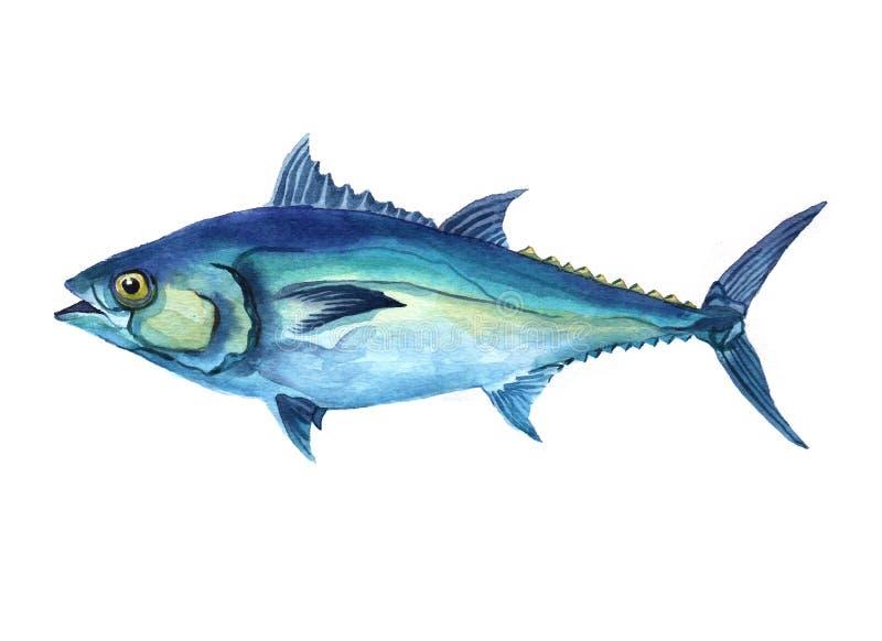Akwarela tuńczyka ryba odizolowywająca na białym tle fotografia royalty free