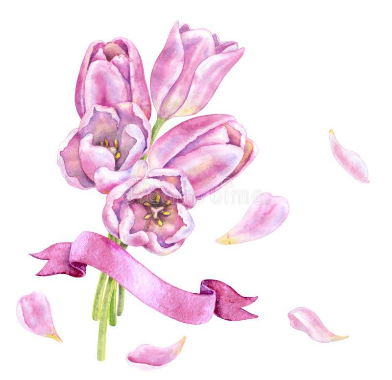 Akwarela tulipanów Różowa wiązka z faborkiem royalty ilustracja