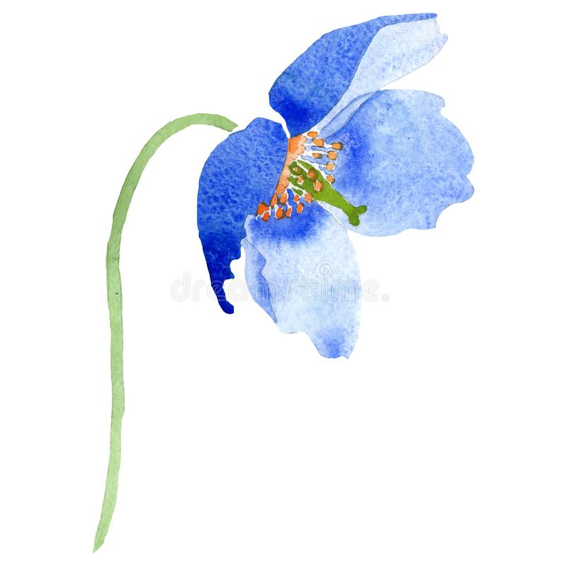 Akwarela ultramarynowy makowy kwiat Kwiecisty botaniczny kwiat Odosobniony ilustracyjny element royalty ilustracja