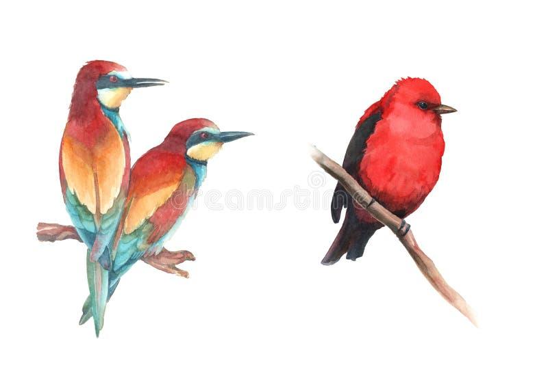Akwarela ustaleni kolorowi ptaki i europejski pszczoła zjadacz - główni ilustracja wektor