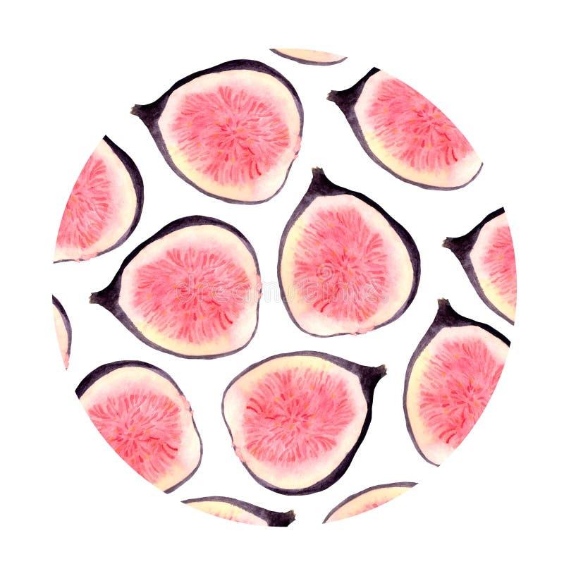 Akwarela ustawiająca świeże figi, plasterki figi i liście na białym tle, ilustracja wektor