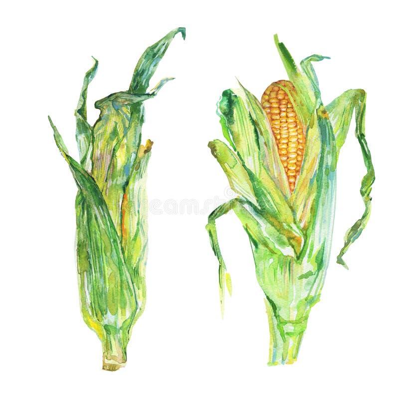 Akwarela ustawiająca kukurudza ilustracji