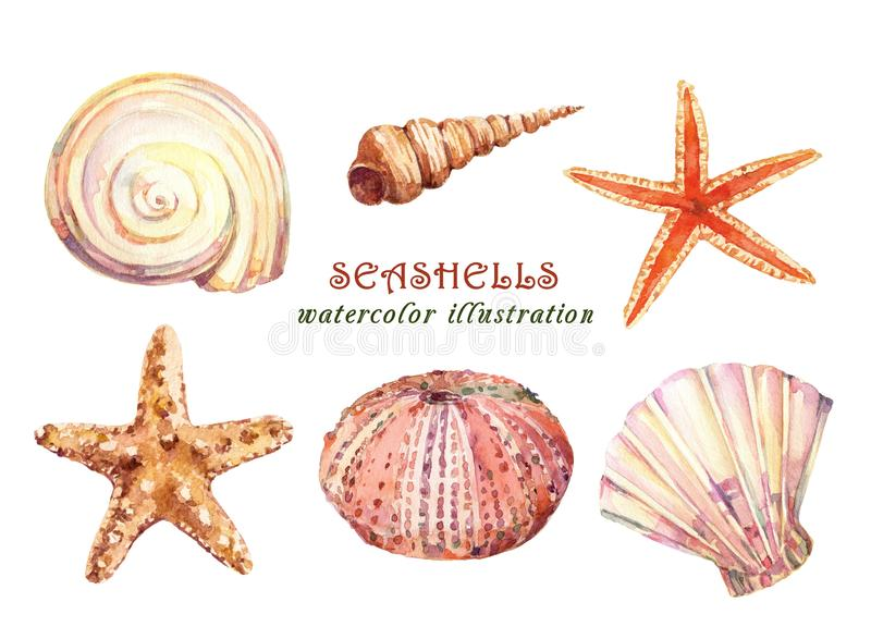 Akwarela ustawiająca podwodny życie protestuje różnorodnych tropikalnych seashells, rozgwiazdy i dennego czesaka -, ilustracji