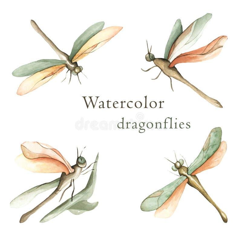 Akwarela ustawiająca realistyczni dragonflies ilustracji