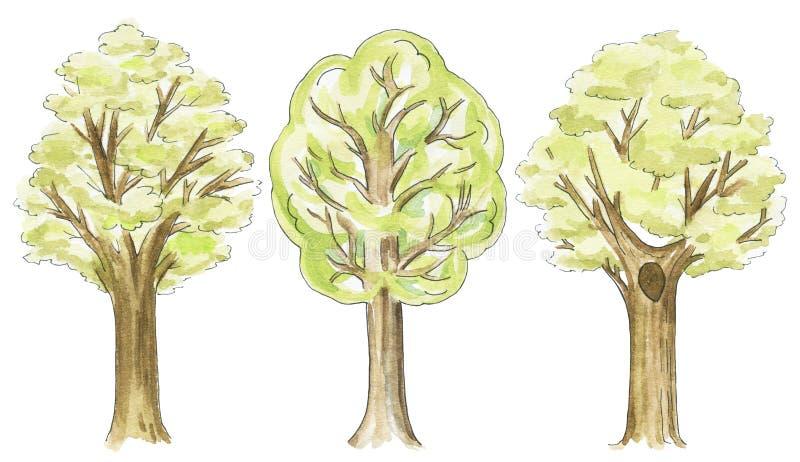 Akwarela ustawiająca trzy różnorodnego drzewa royalty ilustracja