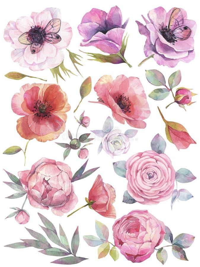 Akwarela ustawiająca z ogrodowymi kwiatami Ręka rysująca ilustracja na białym tle royalty ilustracja