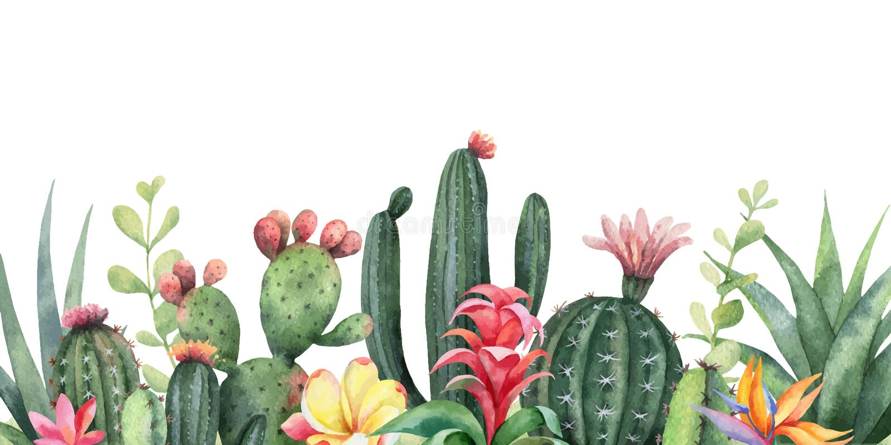 Akwarela wektorowego sztandaru tropikalni kwiaty i kaktusy odizolowywający na białym tle royalty ilustracja