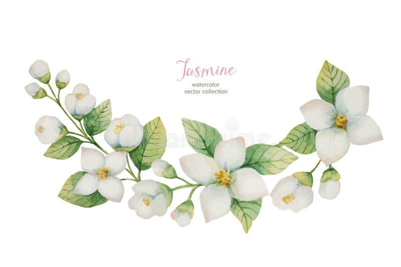 Akwarela wektorowy wianek kwiaty i gałąź jaśmin odizolowywający na białym tle ilustracji