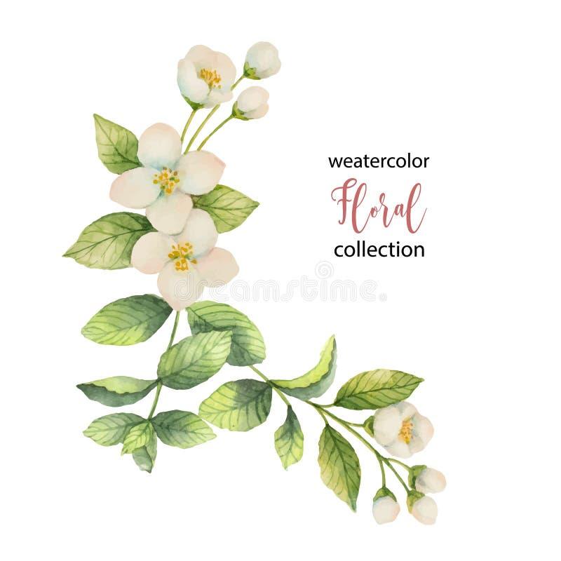 Akwarela wektorowy wianek kwiaty i gałąź jaśmin odizolowywający na białym tle royalty ilustracja