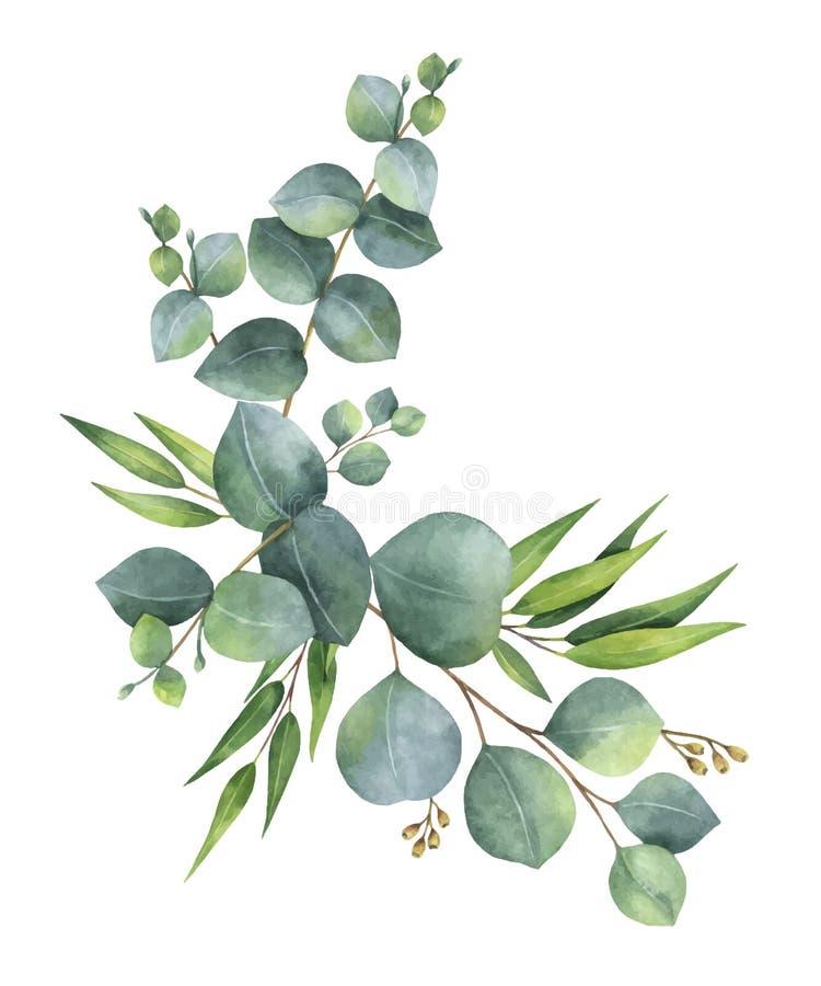 Akwarela wektorowy wianek z zielonym eukaliptusem opuszcza i rozgałęzia się ilustracja wektor