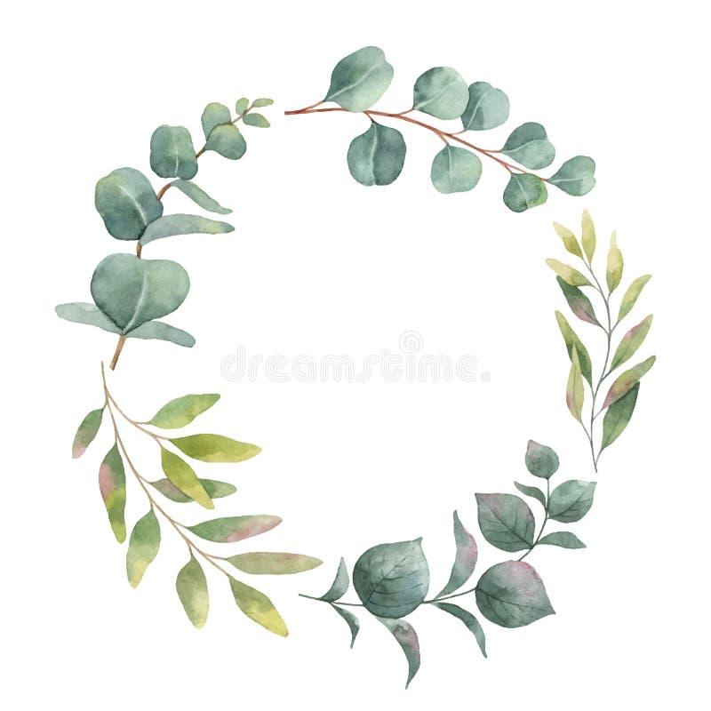 Akwarela wektorowy wianek z zielonym eukaliptusem opuszcza i rozgałęzia się royalty ilustracja