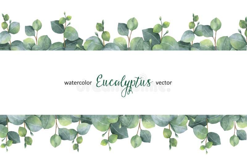 Akwarela wektoru zieleni kwiecisty sztandar z srebnego dolara eukaliptusem opuszcza i rozgałęzia się na białym tle royalty ilustracja