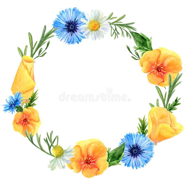 Akwarela wianek lato ??ka kwitnie i ziele Kwiecisty sk?ad maczki, cornflowers i chamomiles, ilustracja wektor