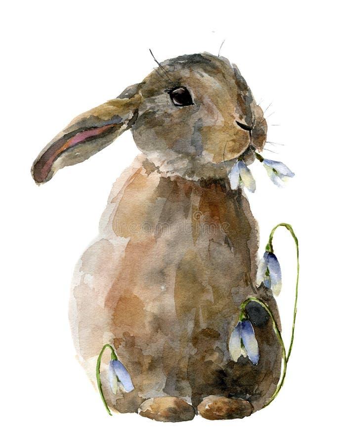 Akwarela Wielkanocny królik z śnieżyczkami Ręka malował kartę z tradycyjnymi symbolami odizolowywającymi na białym tle śliczny royalty ilustracja